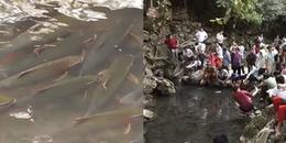 Kỳ lạ hàng vạn con cá thần không ai dám đánh bắt tại Thanh Hóa