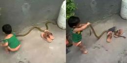 Clip: Ớn lạnh trước cảnh bé gái 2 tuổi vô tư chơi đùa với rắn lạ