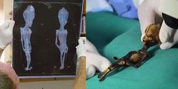 Clip: Kết luận gây tranh cãi về bộ xác ướp tí hon nghi ngờ là người ngoài hành tinh