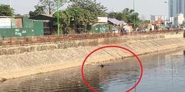 Truy bắt tên cướp đạp hai mẹ con rơi xuống kênh rồi phóng xe 'tẩu thoát'