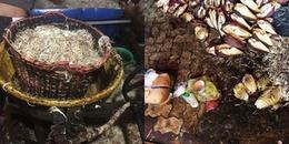 Cơ sở 'tắm trắng' bắp chuối bằng hóa chất: Đình chỉ hoạt động sản xuất 5 tháng