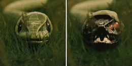 Cận cảnh những quá trình lột xác của động vật, xem đến rắn giật bắn cả mình!