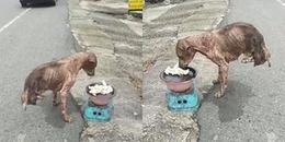 CĐM xót lòng cảnh chú chó cụt chân gầy trơ xương xin ăn: 'Gặp mình thì đã đem về nuôi rồi'