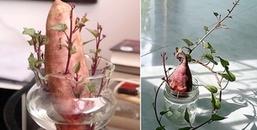 Muốn trồng cây cảnh nhưng không có tiền, lo gì, có ngay bonsai bằng... khoai lang đây!