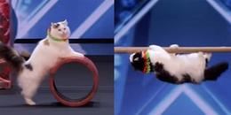 Những chú mèo khiến người xem không khỏi lo ngại sẽ 'xâm chiếm thế giới' vì màn trình diễn xuất sắc