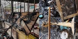 Hà Nội: 30 chú chó bị thiêu chết trong vụ cháy tầng 3 ngôi nhà lúc giữa trưa