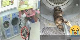 Mèo mẹ đang mang thai bị 2 thanh niên cho vào máy sấy chịu nóng đến chết khiến CĐM phẫn nộ