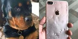 """Cắn nát iPhone 8 Plus còn thái độ """"có cái điện thoại mà ki bo', chú chó bị chủ xử lí thế này đây"""