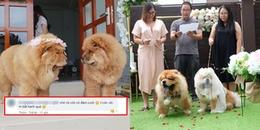 Hôn lễ siêu lãng mạn của cặp đôi 'chó mặt xệ' và phản ứng CĐM: 'Đến chó còn được cưới, mình thì...'