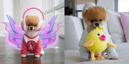 """'Hot dog"""" sở hữu gần 9 triệu lượt theo dõi Instagram: Mức cát-xê """"khủng"""", đóng MV cho Katy Perry"""