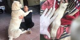 CĐM trầm trồ chiêm ngưỡng giống chó cỡ bự Alabai thuần chủng đầu tiên được sinh sản tại Việt Nam