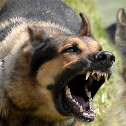 Giải Mã Nỗi Sợ: Hội chứng Sợ Chó - nỗi sợ không hề đơn giản như bạn nghĩ