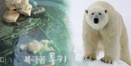 Chú gấu Bắc Cực chết ngay trước khi được tự do khiến nhân viên vườn thú điếng lặng và hối hận