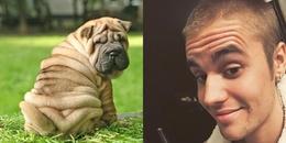 """Khổ thân Justin, lâu lắm mới tự sướng lại bị fan so sánh với chó mặt xệ vì quả trán """"4 múi"""" khó đỡ"""