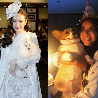 yan.vn - tin sao, ngôi sao - Sướng như cún cưng của sao Việt: Được tổ chức sinh nhật, được cho đi cả spa