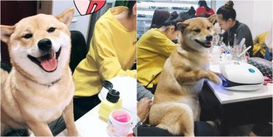 Loạt biểu cảm không thể dễ thương hơn của chú chó khi được làm móng ai nhìn vào cũng yêu