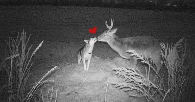 """Cô husky """"bỏ nhà theo trai"""" vào rừng để hẹn hò với anh nai hoang dã"""