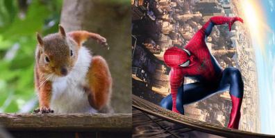 """Góc khám phá: Loài sóc có tư thế tiếp đất """"cool ngầu"""" y như Spider man"""