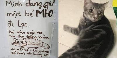 """Tìm chủ cho mèo đi lạc, tấm biển thông báo gây """"sốt"""" vì rất dễ thương"""