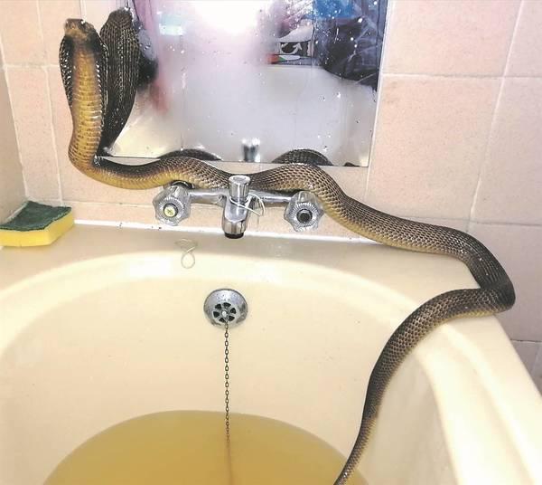 Bé Na xuất hiện trong bồn tắm khiến bà vợ hoảng sợ. (Ảnh: Daily Star)