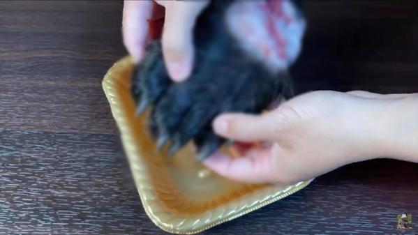 Nữ YouTuber quay cận cảnh chiếc chân gấu. (Ảnh: Chụp màn hình)