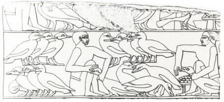 Hình ảnh vỗ béo ngỗng trên một tấm phù điêu cổ đại của Ai Cập