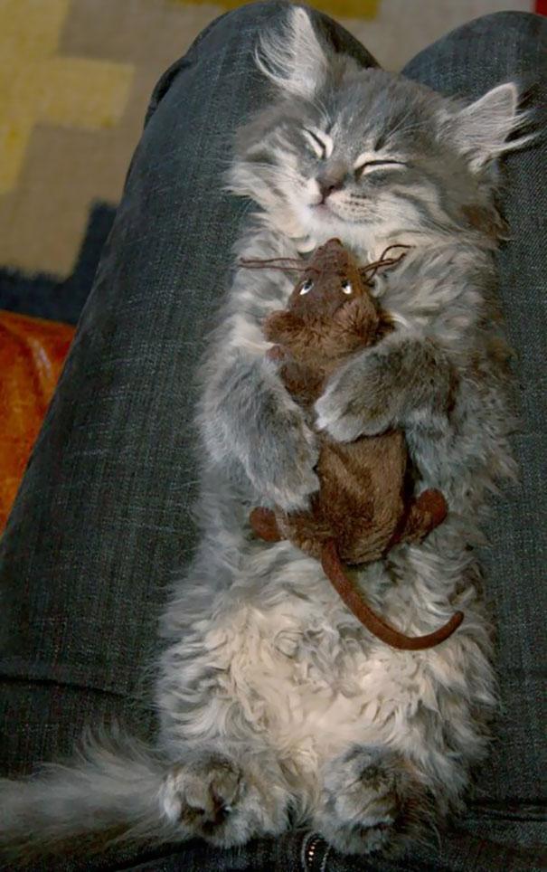 Ai mà nghĩ mèo và chuột sẽ là đôi bạn thân chứ