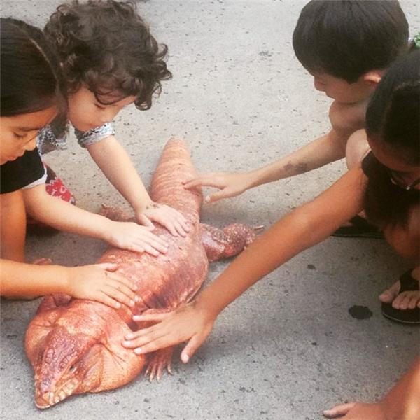 Chú thằn lằn sướng nhất thế giới được chủ chăm bẵm ăn sung mặc sướng