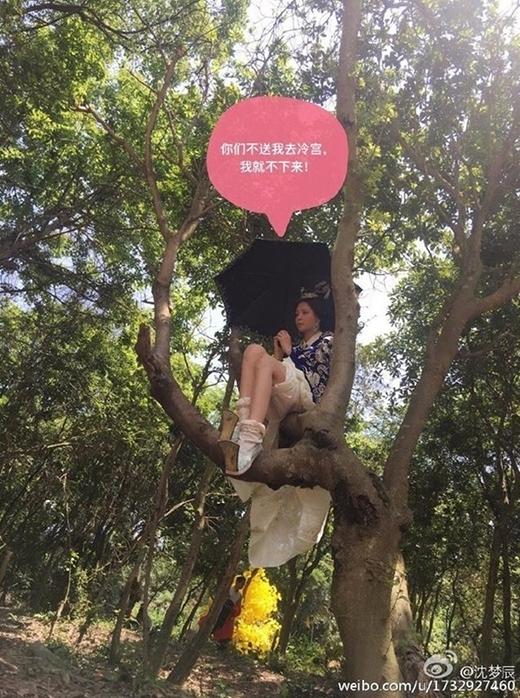 Và trèo cả lên cây để được mát hơn.