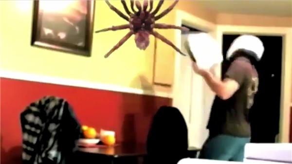 """Kết thúc clip là đoạn """"phi thân"""" của chú nhện khiến nhiều người phải giật mình"""