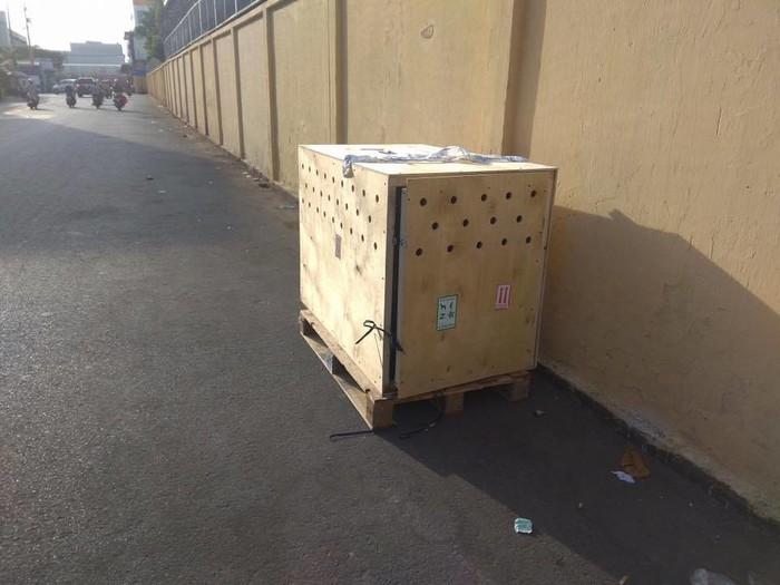 Chiếc thùng được dùng để vận chuyển chú chó về Việt Nam.
