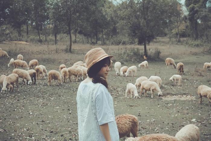 5 đồng cừu