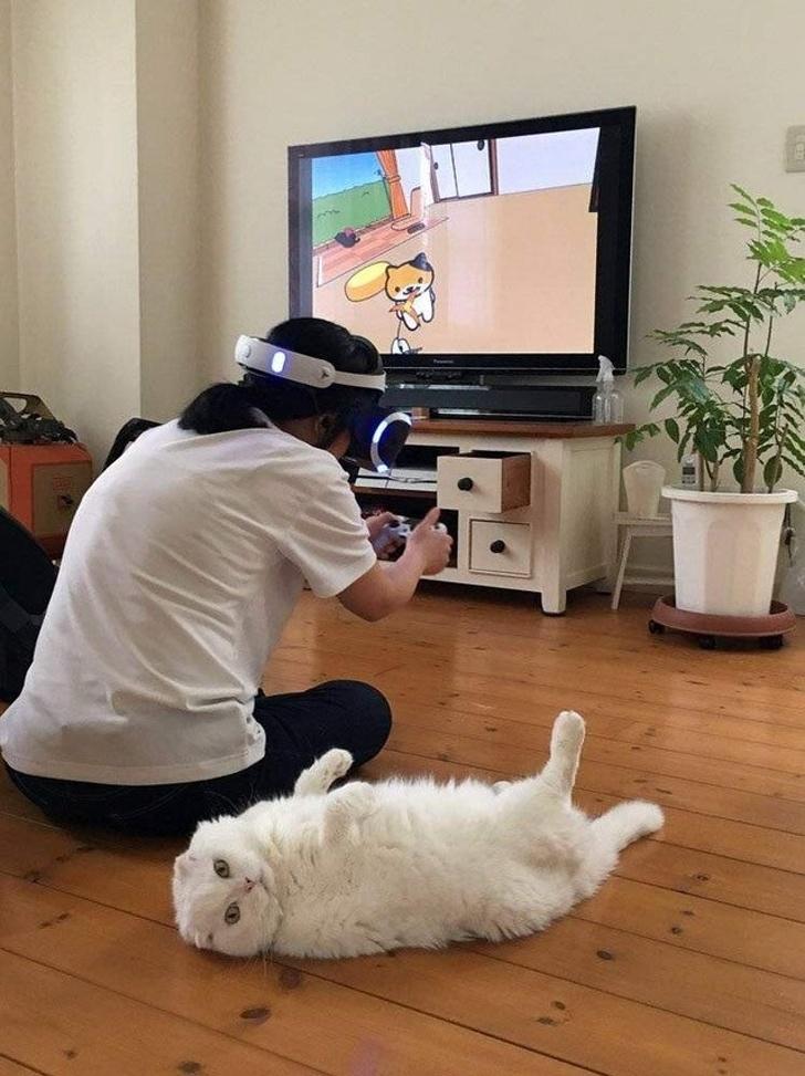 Chú mèo này có vẻ mặt như là thật sự không hiểu chủ đem em nó về nuôi làm gì để rồi phải nựng mèo bằng game thực tế ảo như kia...
