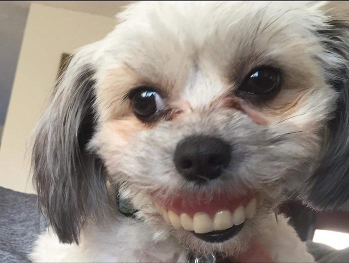 Tranh thủ lúc sen đi ngủ, boss 'mượn tạm' hàm răng giả và trở nên hài hước thế này đây!