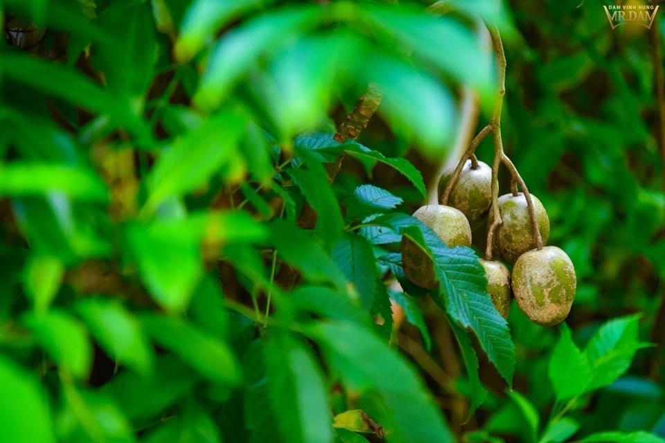 """""""Ông hoàng nhạc Việt"""" còn có thú vui khitrồng khá nhiều cây quả như: chùm ruột, quýt, lựu, cốc,... - Tin sao Viet - Tin tuc sao Viet - Scandal sao Viet - Tin tuc cua Sao - Tin cua Sao"""