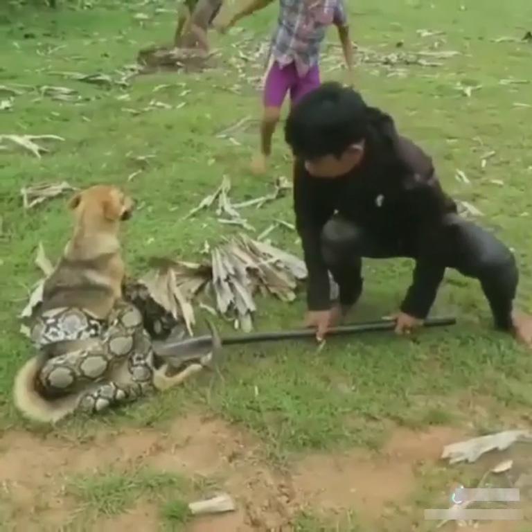 Ba đứa trẻ hè nhau giải cứu chú chó khỏi con trăn.