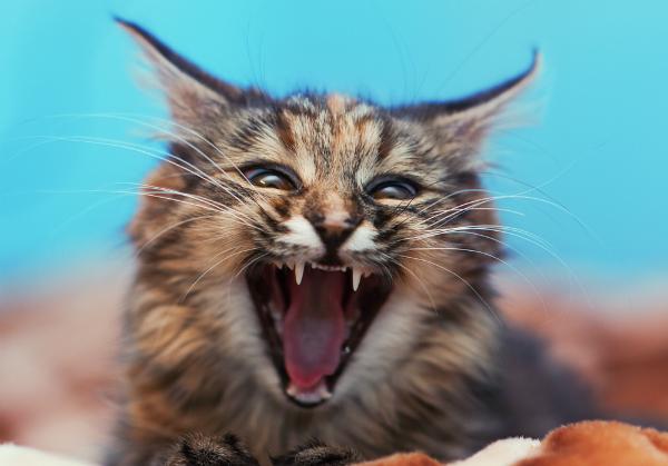 Giải Mã Nỗi Sợ: Chứng sợ mèo khó hiểu đã gây ám ảnh với không ít người