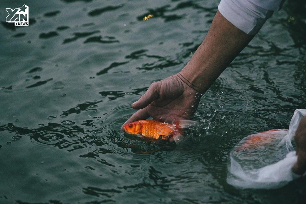 Theo quan niệm tâm linh, cá chép là phương tiện đưa Táo quân về trời...