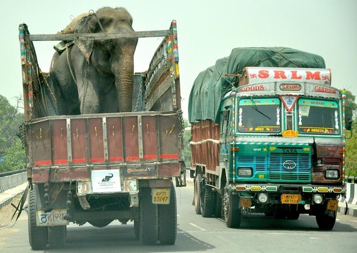 Nó được cho lên xe tải và đưa đến nơi an toàn, tránh xa khỏi người chủ tàn ác.