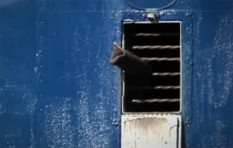 Nó vươn vòi ra cửa sổ như muốn tìm kiếm tự do.