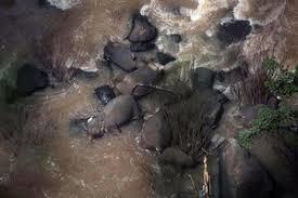 """6 con voi chết thảm khi """"dạo chơi"""" gần thác nước tử thần."""