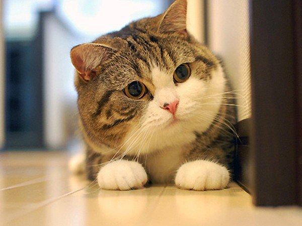 Mèo là loại động vật rất thích tương tác với con người (Ảnh: Facebook)
