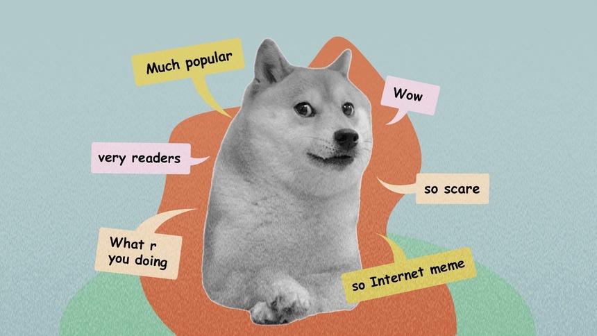 Kabosu là giống chó Shiba, được dùng làm meme Doge (Ảnh: Zing)