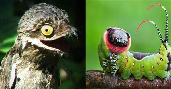 """7 sinh vật có ngoại hình xấu không tưởng như là """"con ghẻ"""" của thiên nhiên"""