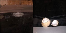 Đỗ xe ở chung cư giữa chốn đô thành mà có ngày suýt chết vì quả dừa rơi thủng cả kính ôtô