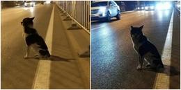 Cảm động câu chuyện chú chó trung thành ngồi đợi suốt 80 ngày tại nơi cô chủ thiệt mạng
