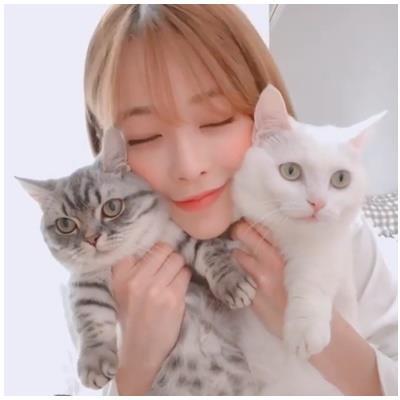 yan.vn - tin sao, ngôi sao - Khoa học chứng minh loài mèo không vô tâm, sống tình cảm hơn cún