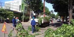 yan.vn - tin sao, ngôi sao - Phó chủ tịch UBND TP.HCM chỉ đạo rà soát, yêu cầu không tự ý chặt cây