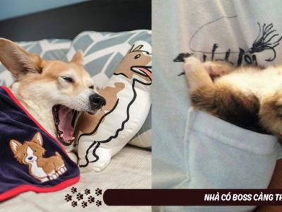 """Muôn vàn kiểu ngủ vừa đáng yêu vừa """"bá đạo"""" của thú cưng"""